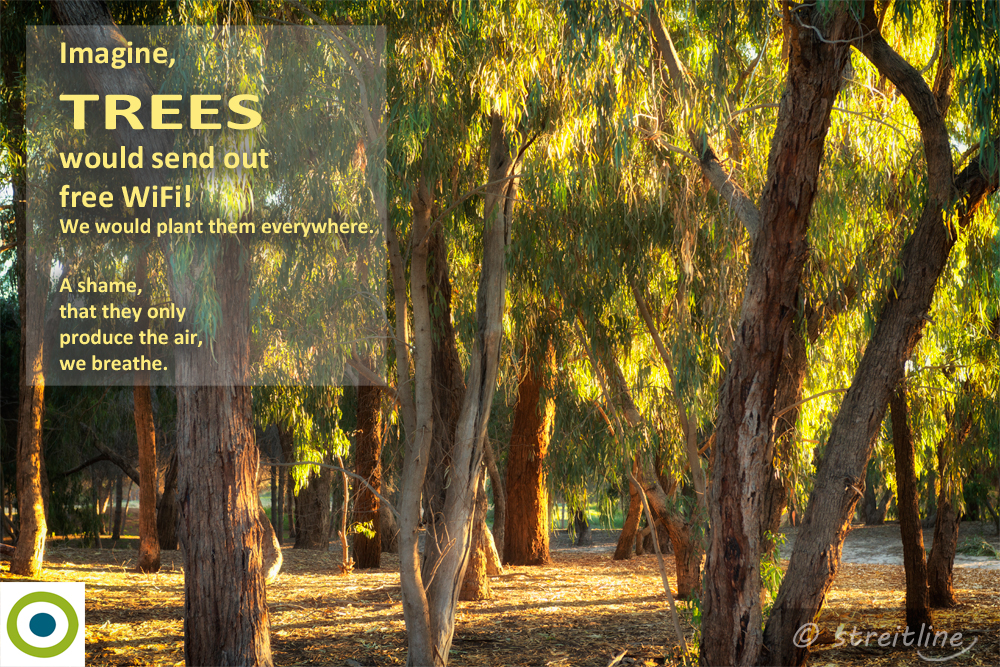 Day of Forests 2016